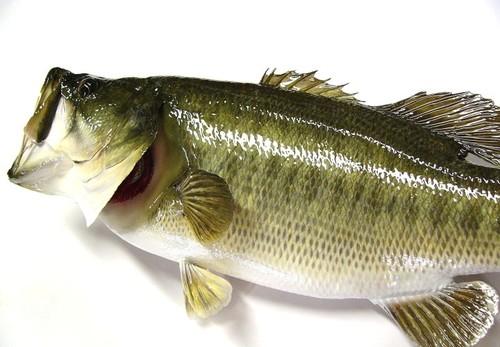 bass15