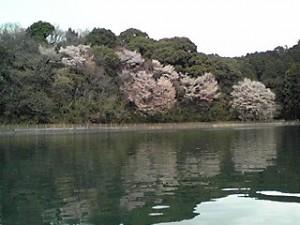 桜咲く中堤
