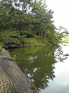 7月の立岡池