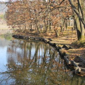冬の立岡池