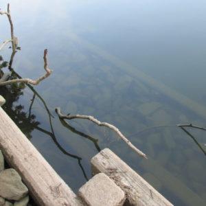 中堤の水位